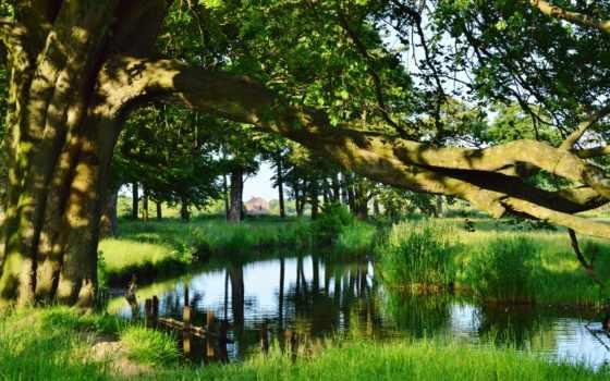 трава, природа, деревя