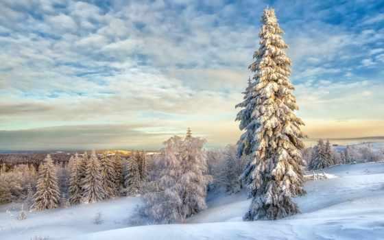 winter, снег, лес, метки, ёль, небо, eli,