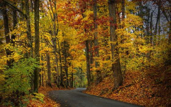 листья, дорога, осень