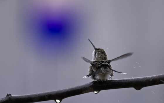 колибри, коллекция, природа, branch, птица, collector, разные, лучшая, снег, уже,