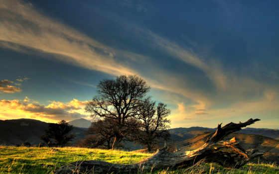 природа, full, страница, trees, осенние, дерево,