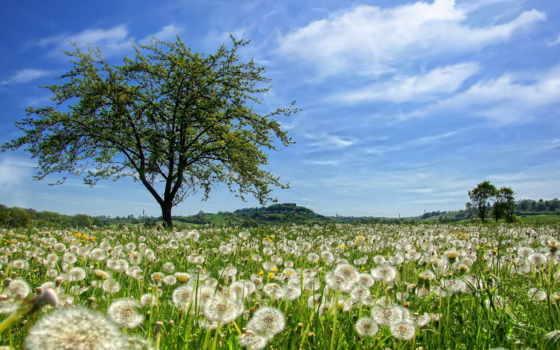 природа, одуванчики, фоны, photoshop, cvety, mobile, поле, browse, портал, телефон, вектор,