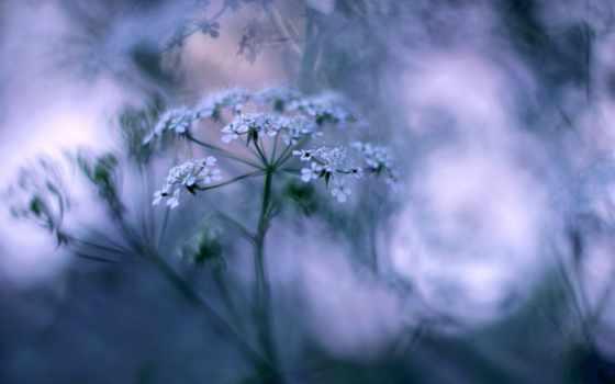 трава, красивые, душі, historia, desktop, just, фон, wasp, волосы,