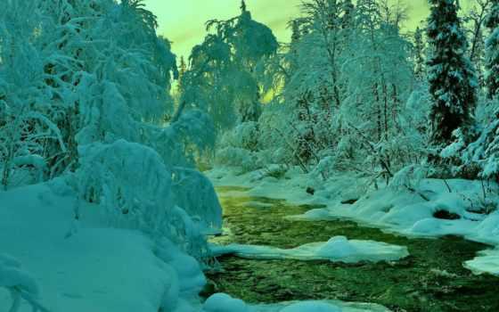 небо, winter, лес