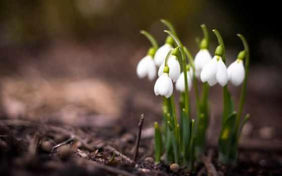подснежники, цветы, весна Фон № 96771 разрешение 1920x1200