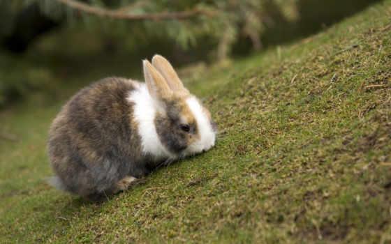 кролик, трава, кролики