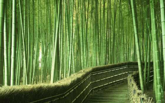 природа, красивых, самые, красивые, лес, japanese, мира, бамбук, места, сагано,