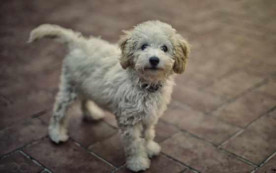 собака, бутик, luminous, салон, пристальным, our, dogs, взгляд, смотрит,