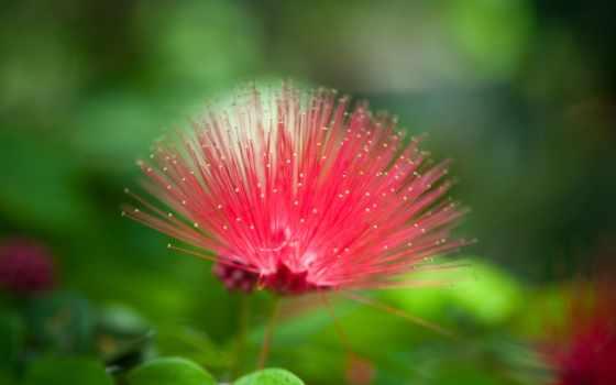 цветы, cvety, flowers, unusual, трава, красивый, листва, макро,