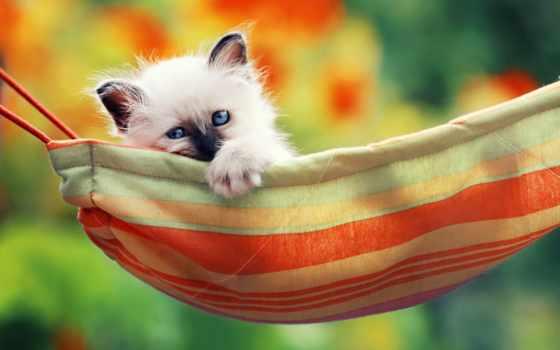 cute, сиамский, mobile, супер, kittens, little, котенок, телефон,