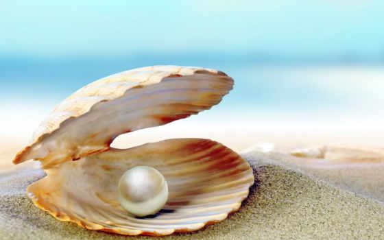 камень, розовый, pearl, seashell, lingvoprofessio, julho,