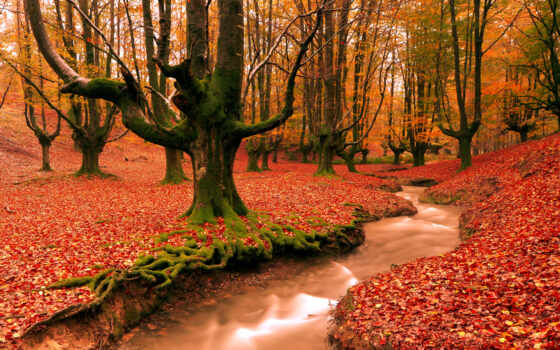 лес, осень, дорога