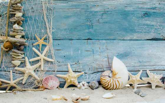 пляж, seashells, seashell, песок, starfish, marine,