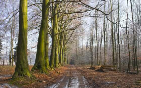 лес, утро, туман, trees, дорога, land, трава, свежесть, листва, мох, брёвна,