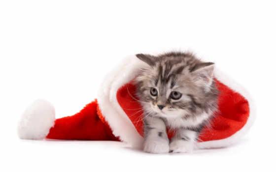 новогодние, котенок, shine