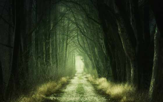 лес, воронеже, области, нашли, dark,