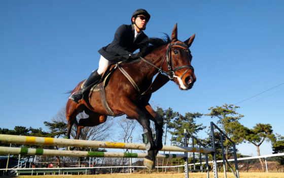 лошадь, прокатиться, устройство, спорт, прыжок, фон, mobile, биг, gemorroi, кот