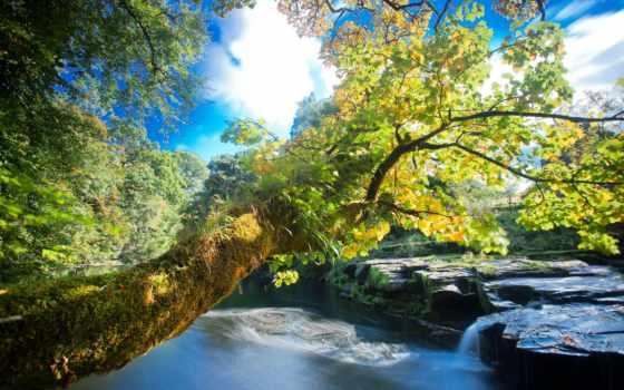 природа, водопад, деревья Фон № 49856 разрешение 2560x1600