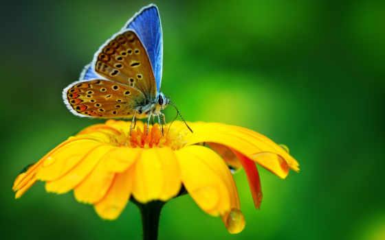 макро, капли, цветы, бабочка