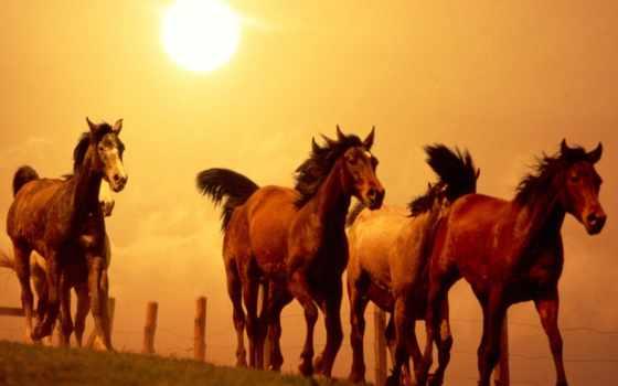 лошадей, стадо, лошади, подымает, снег, бежит, поляне,
