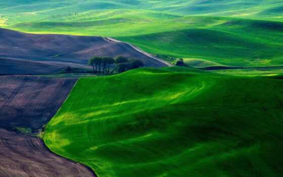 поля, зеленые, панорама