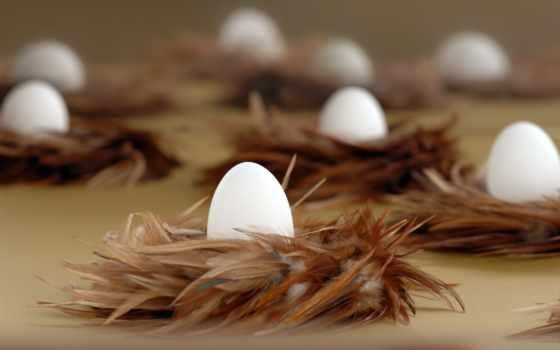 яйца, easter, перья, праздники, bunny,