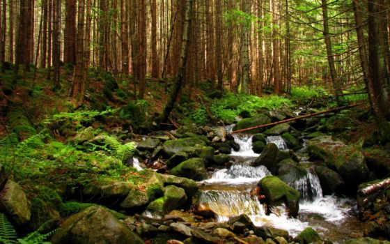 карпаты, ручей, ukrainian, лес, лесу, леса, горганы, ручеек, природа,