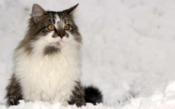 кот, winter, снег, взгляд, доски, kitty,