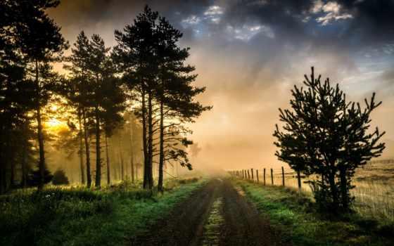 лес, дорога, туман, утро, trees, you, country, winter, forcing,