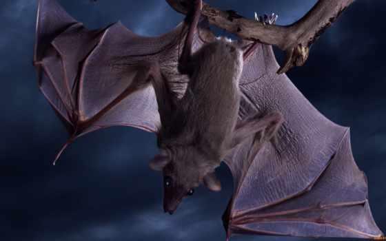mouse, летучая, мыши, летучие, праздник, bat, zhivotnye, летучей, halloween, млекопитающее,