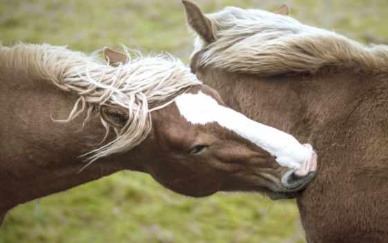 кони, лошади, лошадь, живопись, canvas, следы, desktop,