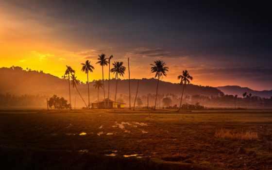 palm, закат, гора, malaysia, изба, jungle, arbat