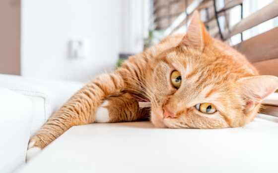 кот, ли, koronavirus, работать, ветеринарный, пол, utis, ароматизатор, love, креатив, college