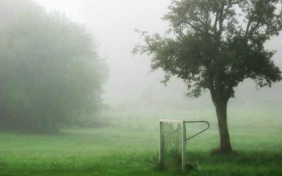 ворота, туман