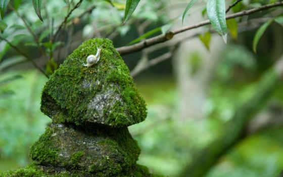 улитка, мох, камни