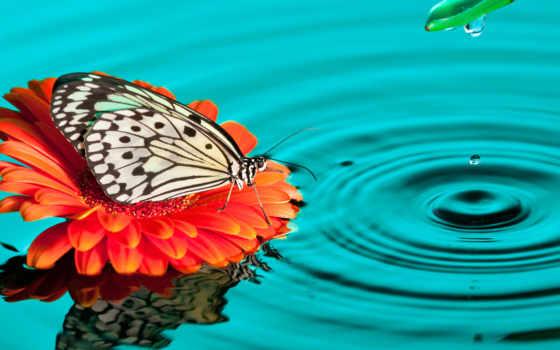 бабочка, цветы, images