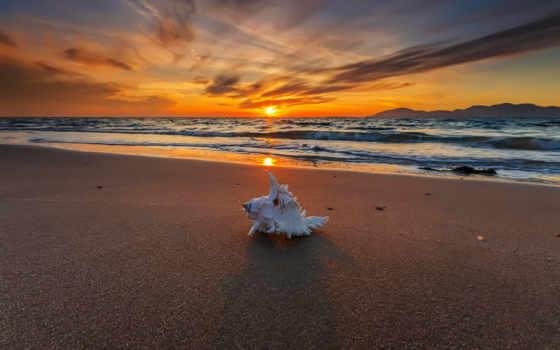 закат, пляж, images, pinterest, seashell, best, shell, мар, море,