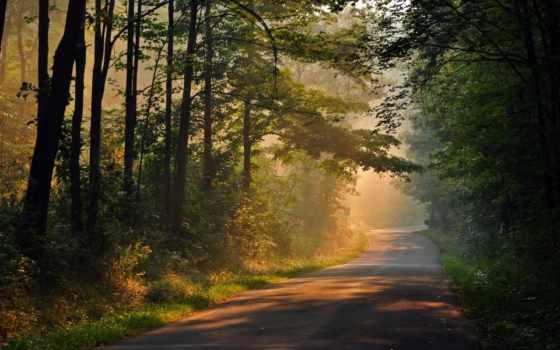 trees, фон, дерево, full, экран, природа, widescreen,