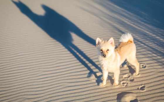собака, desktop, photos, pictures,