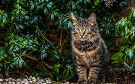 кот, порода, природа, high, другой, car, креатив, фото, archive, permission