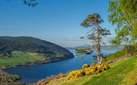 highland, canvas, print, scottish, loch, дерево, несс, art, кристи