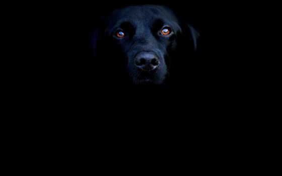 black, часть