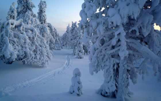 winter, природа, пейзажи -