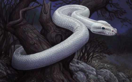 змеи, anime