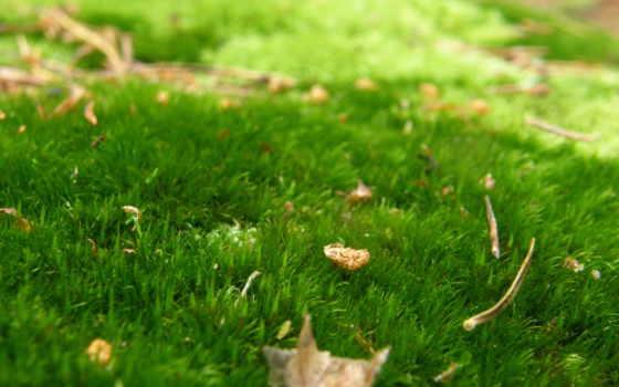 трава, лес, природа