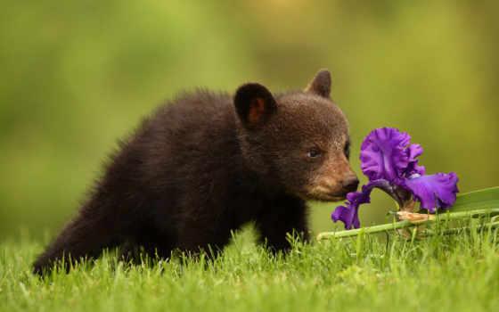 красивые, фотографий, такие, животных, тоже, zhivotnye, devushki, ждут, eti, момента,