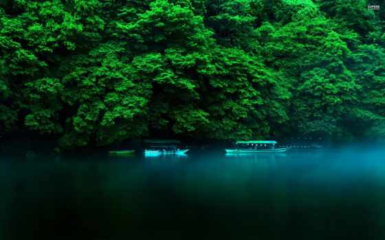 japanese, kyoto, хонсю, префектура, остров, природа, region, лес, вечер, осень, кансай,
