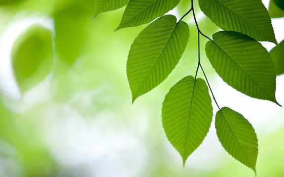 природа, страница, branch, possible, установить, определению, слов, маске, листва, снег,
