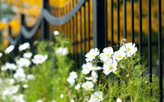 забор, макро, cvety, сетка, космея,