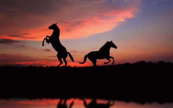 лошади, лошадь, закат, zhivotnye, силуэт,